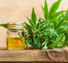 CBD Oil Companies To Purchase From In 2020
