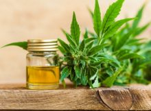 8 Inquiries It Is Recommended To Ask Concerning Cbd Oil For Pets